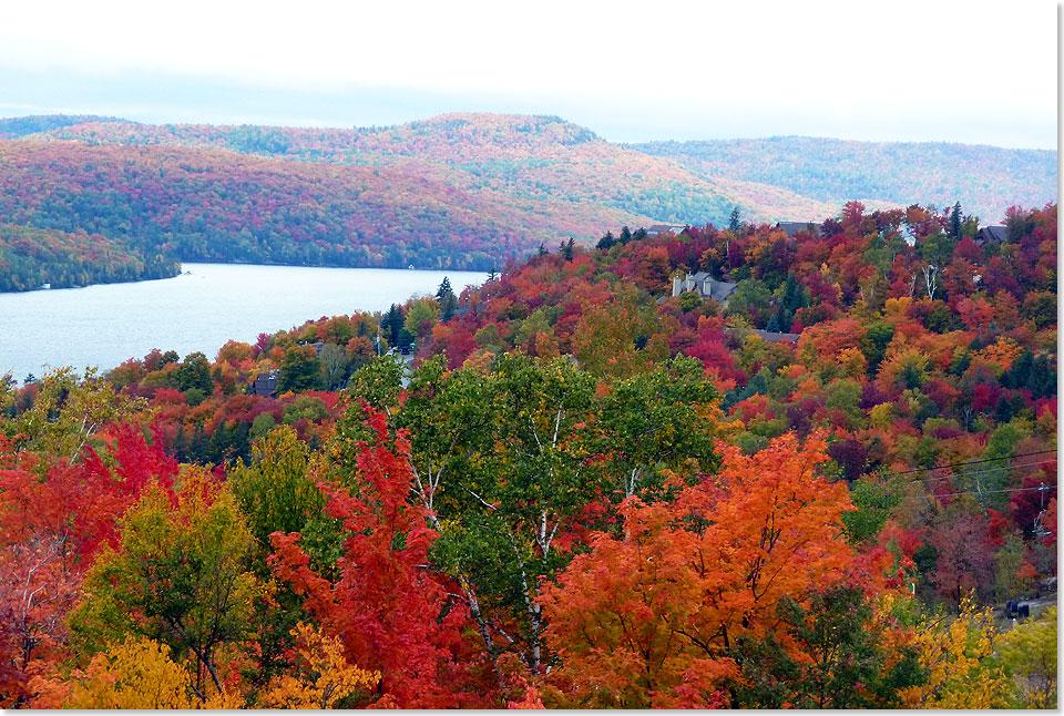 Seereisenmagazin Nach Kanada Wenn Der Herbst Den Wald Verzaubert